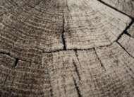 Bild på mattan Redwood